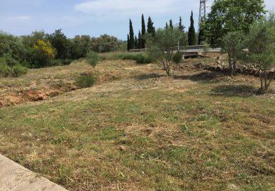 Creació franja baixa densitat de vegetació